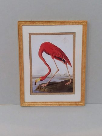 P-160 Framed Print Flamingo